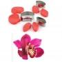 Pavoni - Комплект резци и силиконови вейнъри - Орхидея